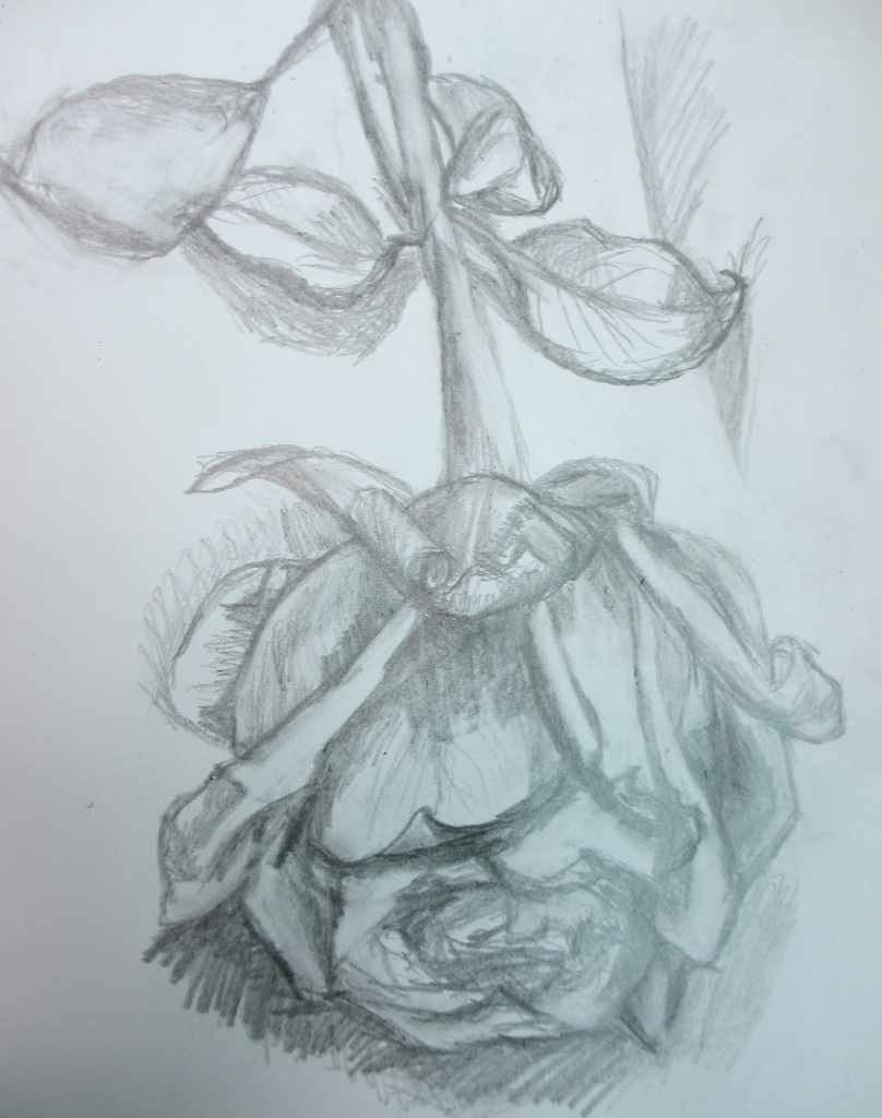 808x1024 Pencil Drawing Rose Flower Pencil Drawing Half Dead Rose Flower