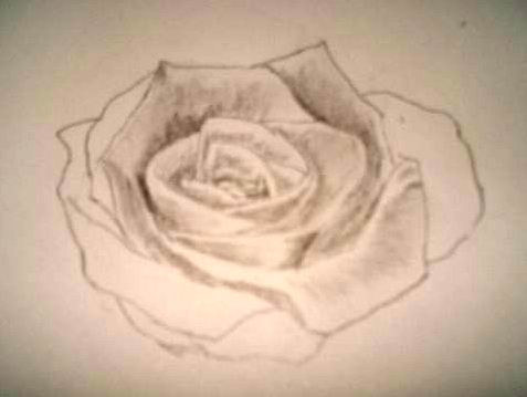 477x359 Pencil Drawings and Rose Sketches