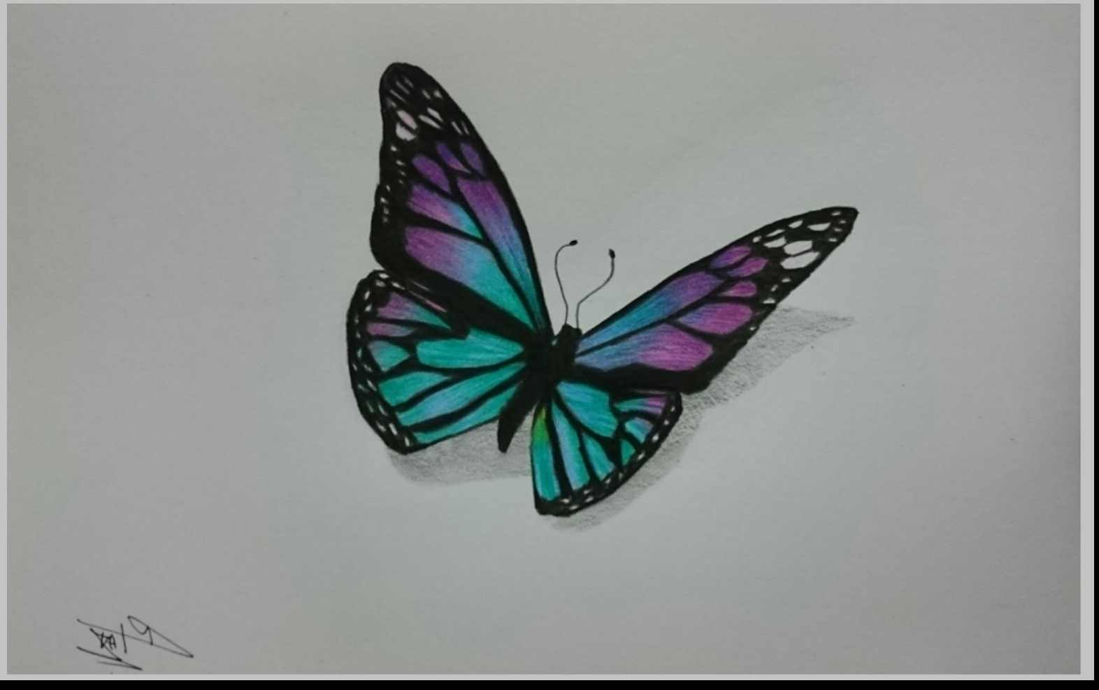 1572x988 Drawing Butterflies With Colored Pencils Drawn Butterfly Colour