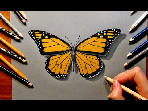 480x360 Drawing a Butterfly with Colored Pencils