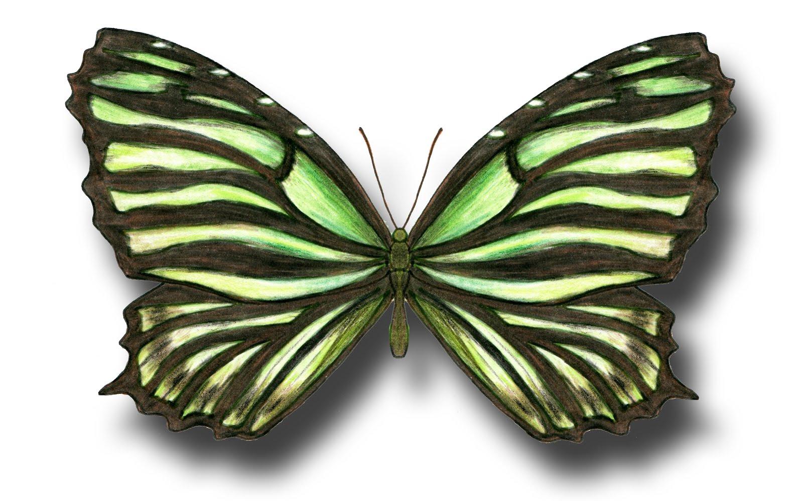 1600x1000 Aileen Biser's Blog Green Butterfly
