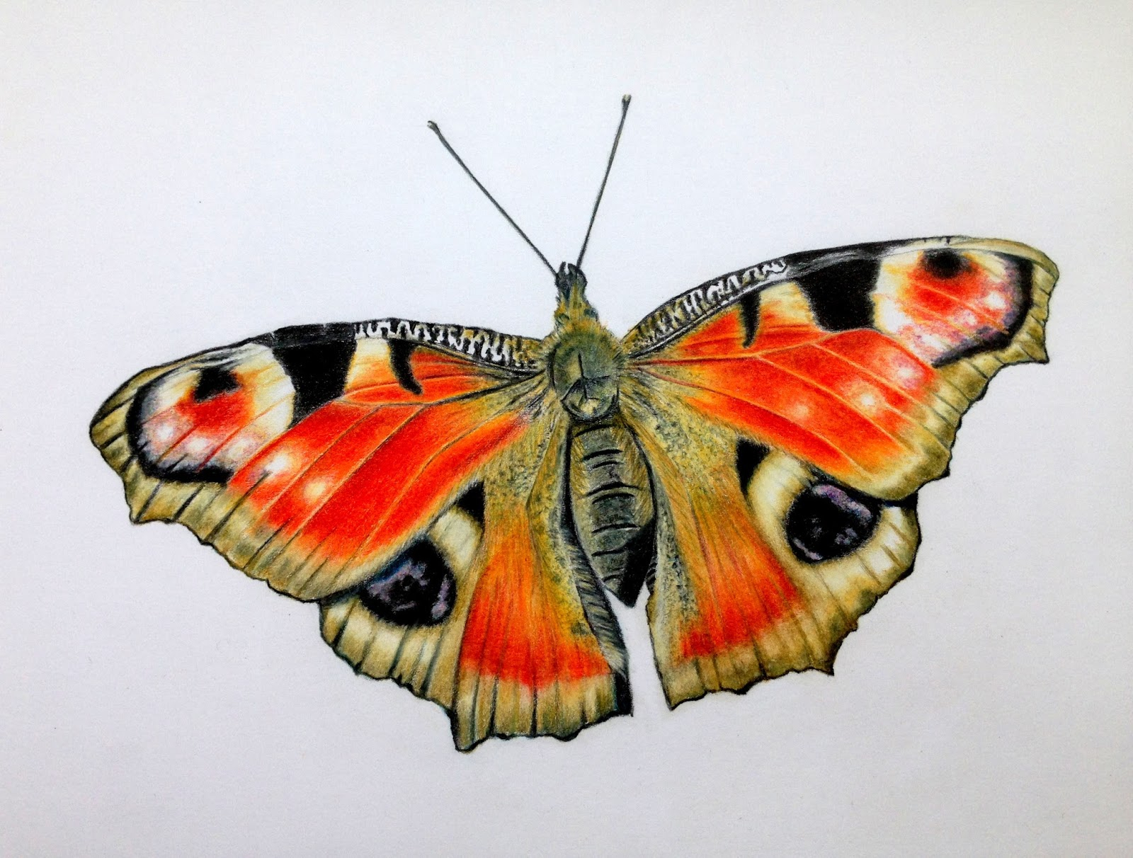 1600x1212 Butterfly Colour Pencil Drawing Artful Evidence Coloured Pencil