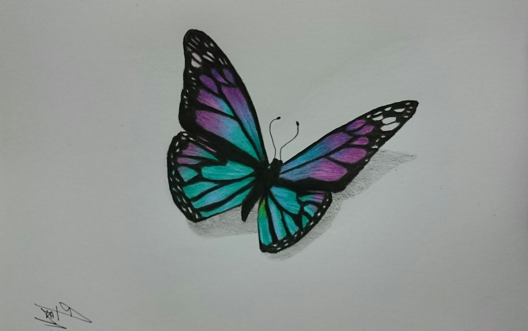 1838x1152 Butterfly In Drawing In Color How To Draw A Realistic Butterfly