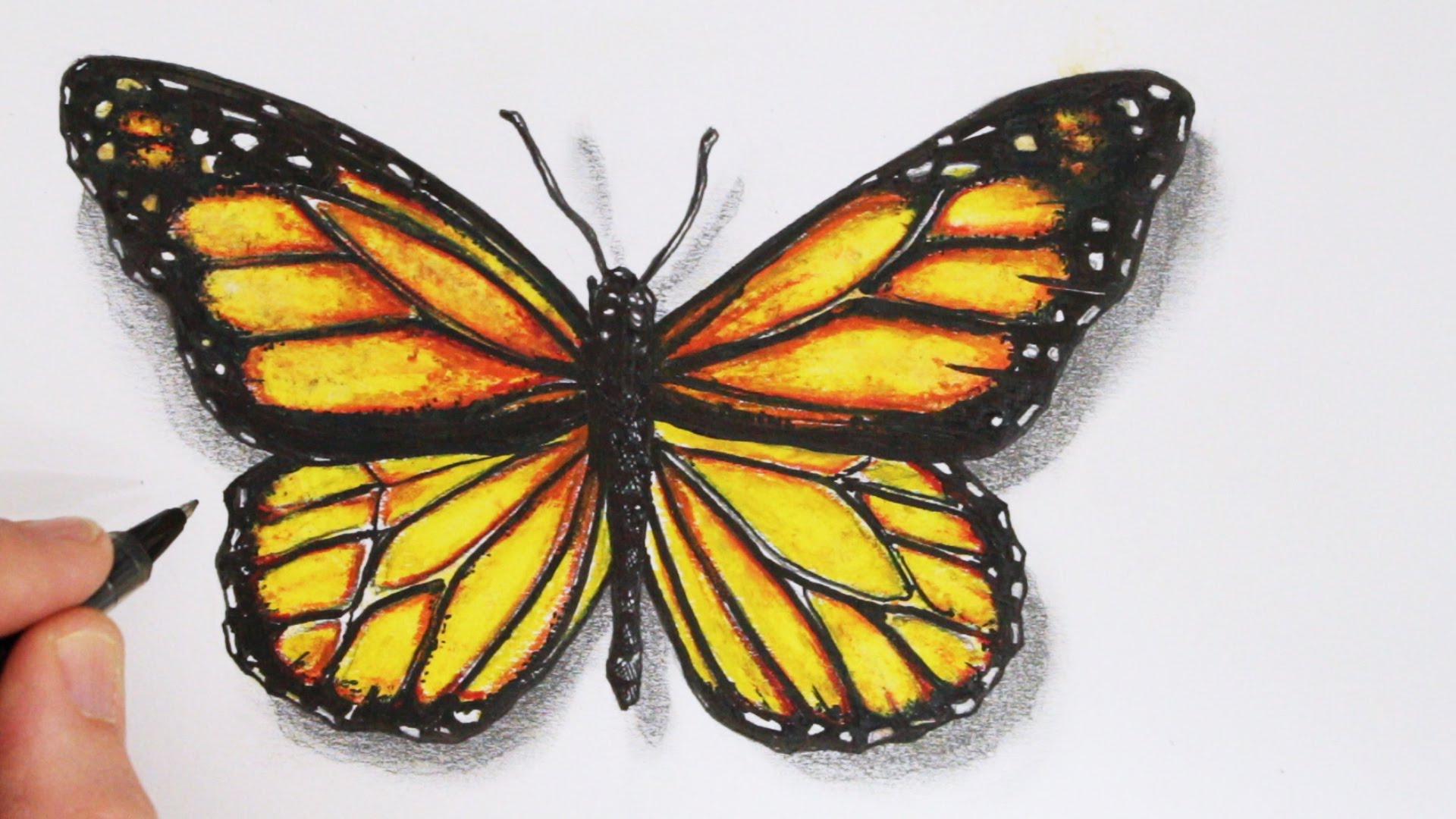 1920x1080 Butterfly Realistic Drawing