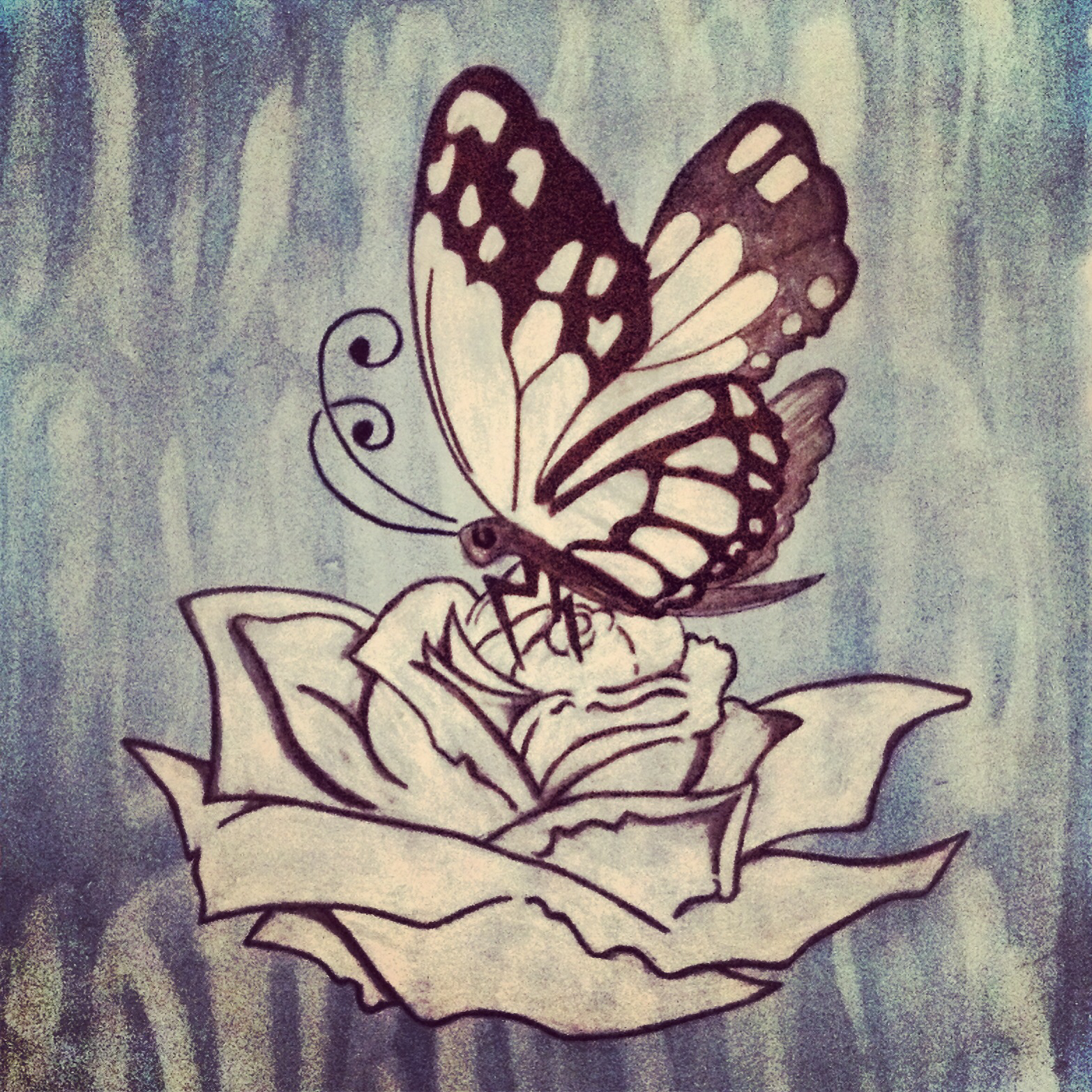 1566x1566 Butterfly and rose pencil drawing. Watercolor background. Art by