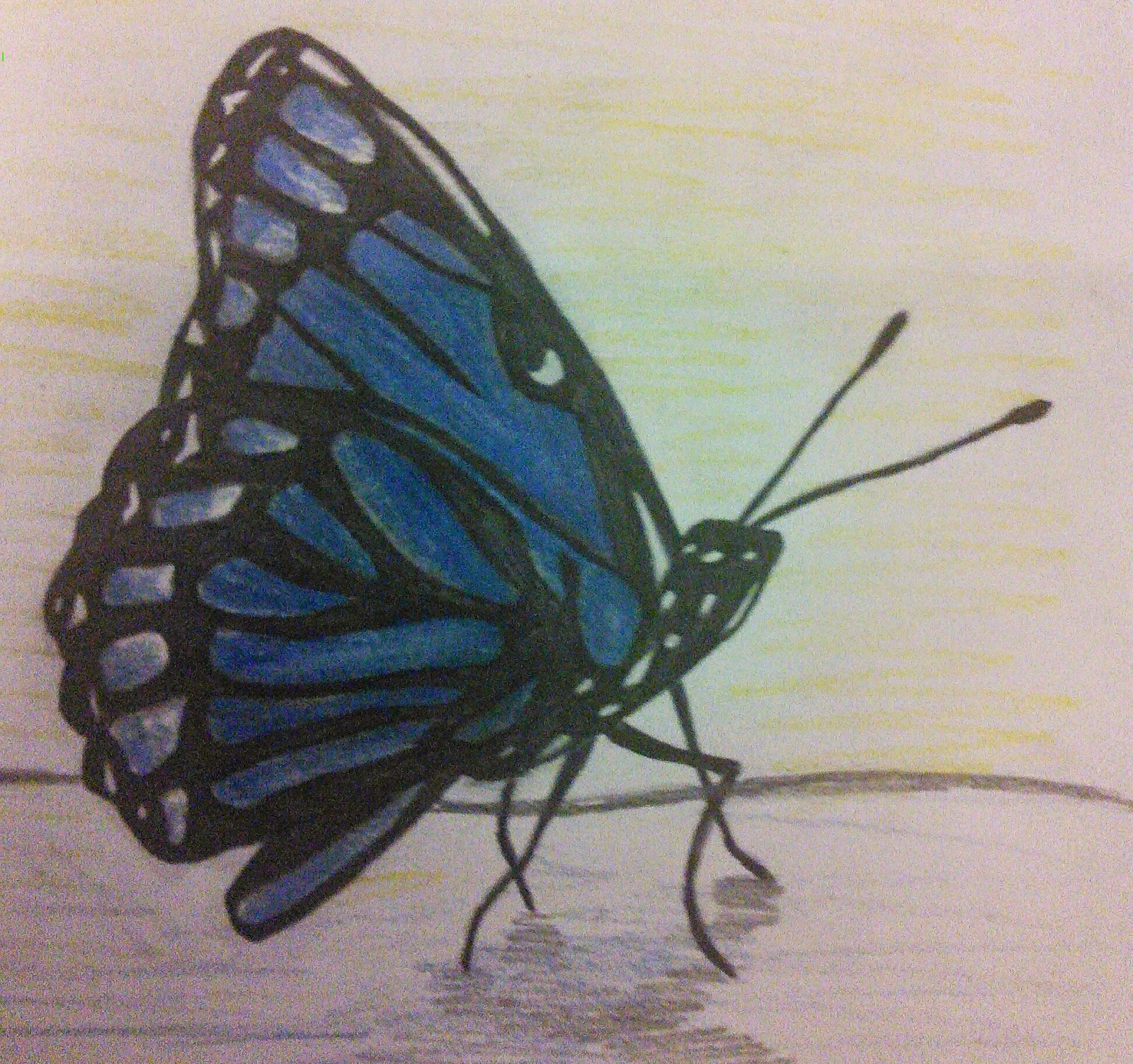 1600x1503 Savvy Art Drawing Blue Monarch Butterfly