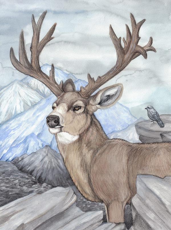 600x806 Free Deer Drawings Amp Designs Free Amp Premium Templates