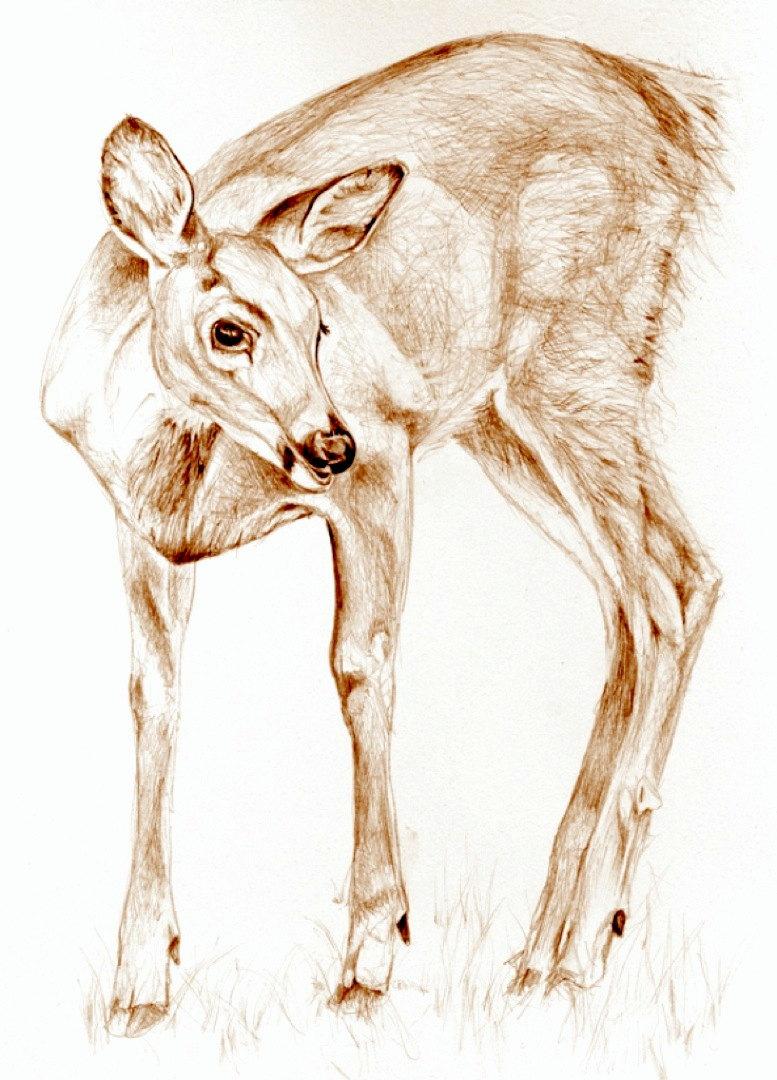 777x1080 Art, Sepia Drawing Deer In The Garden, Dear. Nature Art. Print