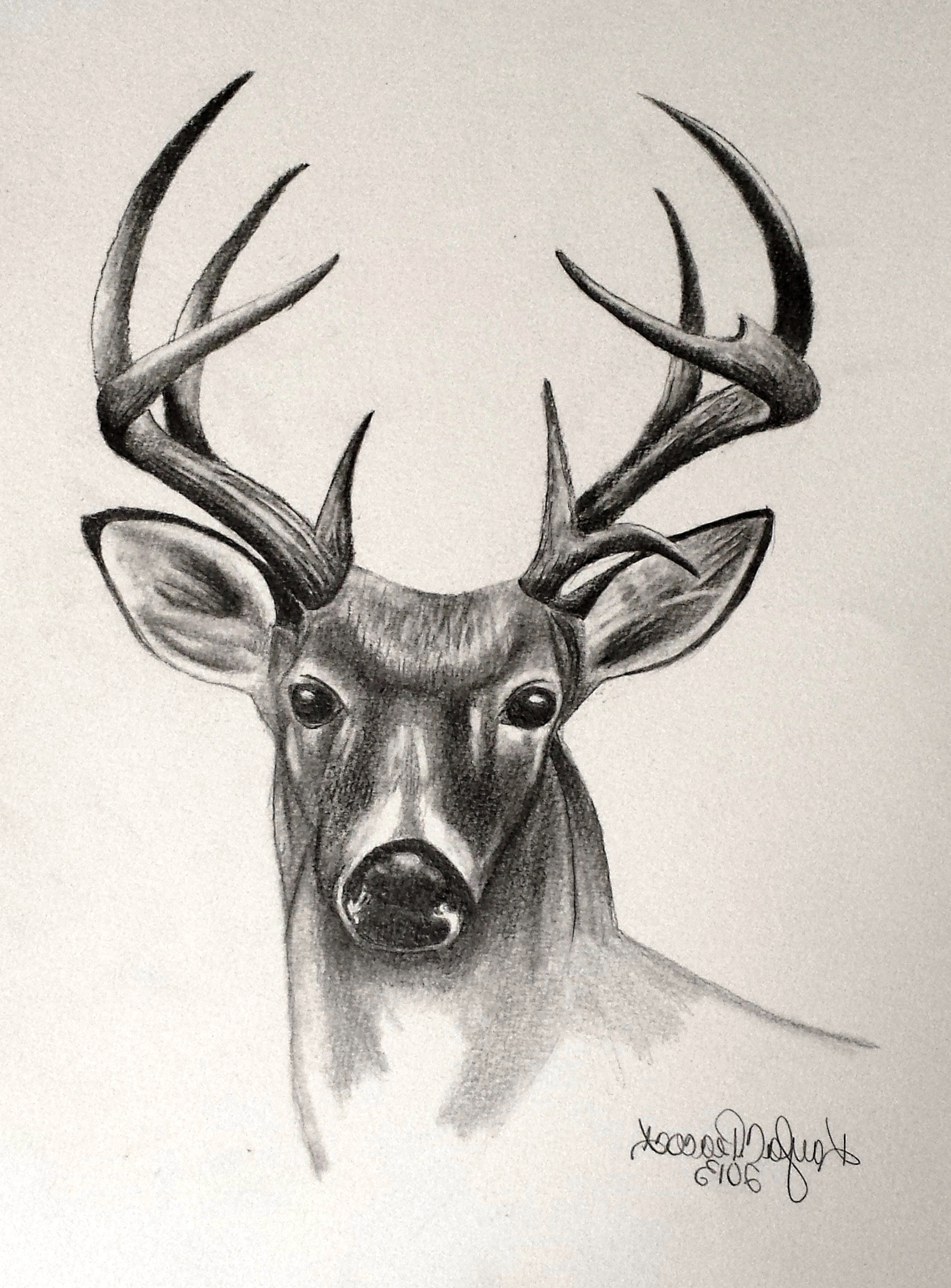 Drawing To Scale Online Pencil Drawing Of Deer At Getdrawings Com Free For