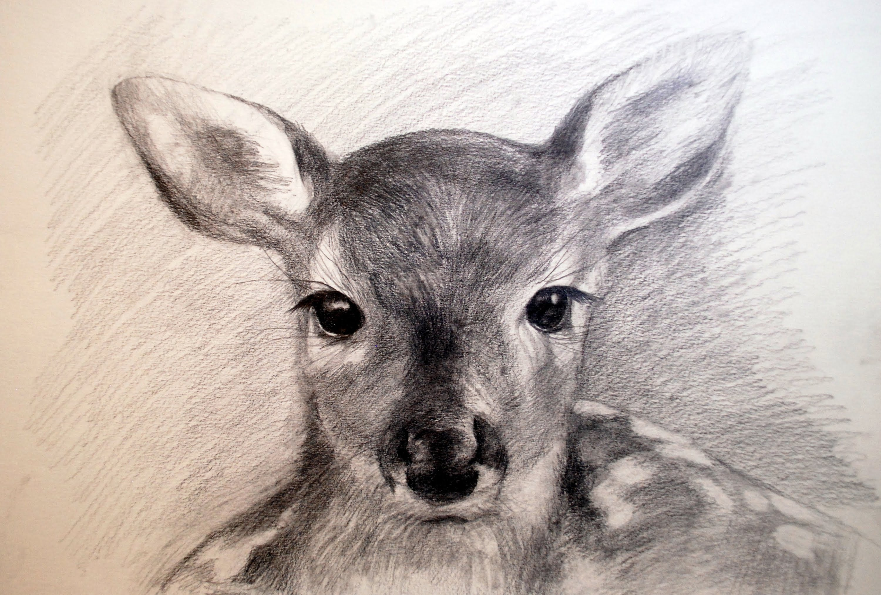 3000x2028 Drawing A Doe Pencil [Speed]