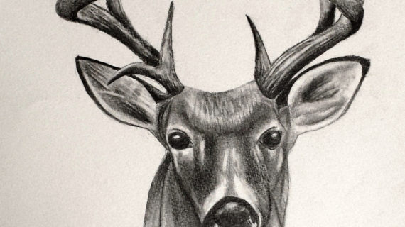 570x320 pencil sketches of deer deer sketches