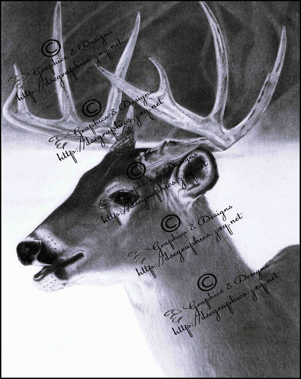 600x756 Realistic Pencil Drawing Of A Deer By Booters