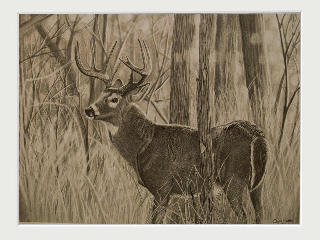 1024x769 Whitetail Deer Pencil Drawing By Dustindattilioart