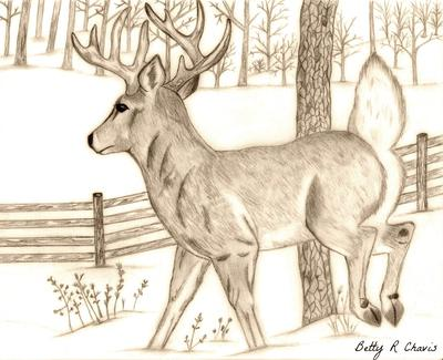 400x325 Drawing Of A Buck