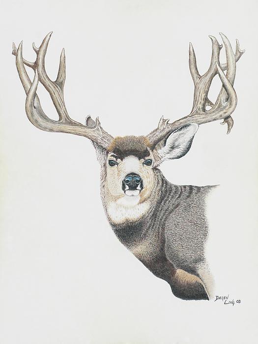 525x700 Mule Deer Art