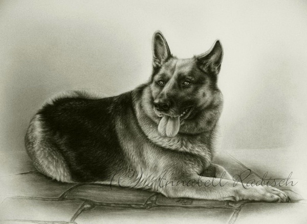 600x439 10 Lovely Dog Drawings For Inspiration
