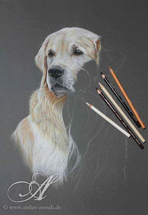498x720 Chien Dessin Couleur Dog Art Coloured Pencils