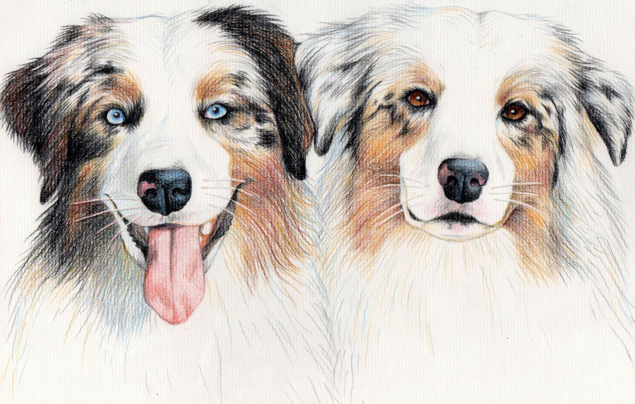 1275x811 Ours For A Year Another Pet Portrait