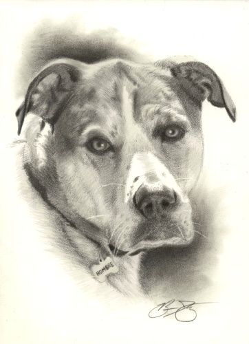 362x500 Pencil Drawings Dog Art Dog Drawings, To Find Out