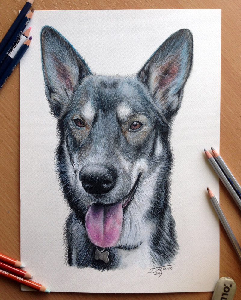 801x997 Pencil Drawing Of A Dog By Atomiccircus