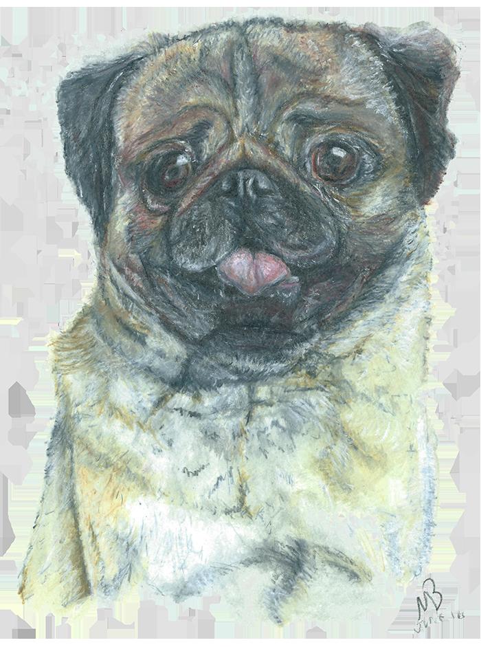 700x941 Pug, Dog, Pencil Drawing