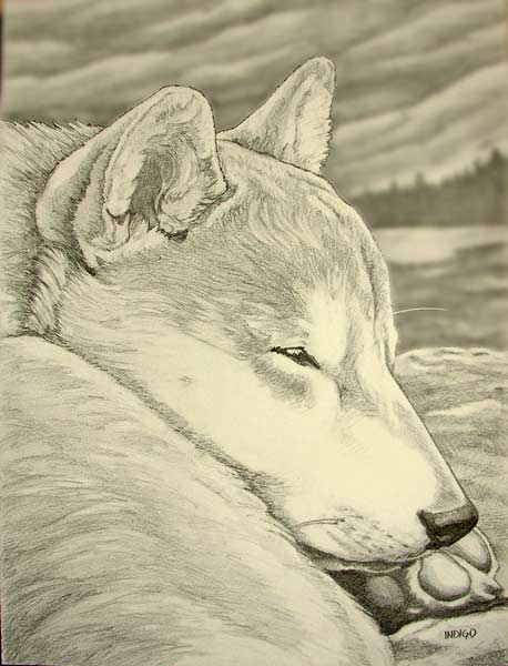 458x600 Sketches Amp Pencil Drawings Landscapes Sketches Portraits Wildlife
