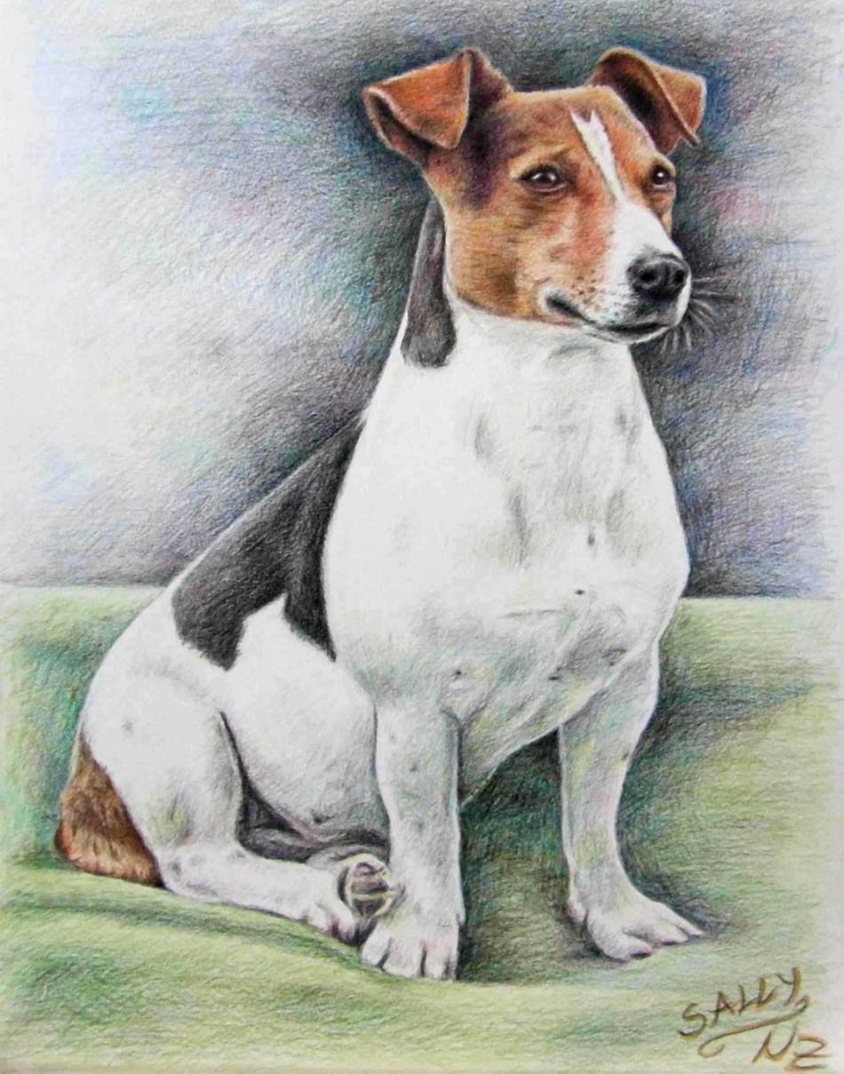 950x1209 Dog Color Pencil Drawing Nicole 5