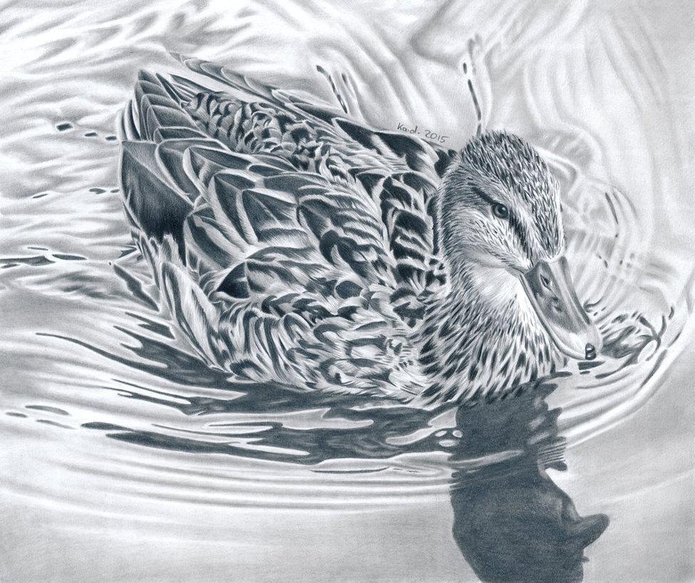 976x818 Duck