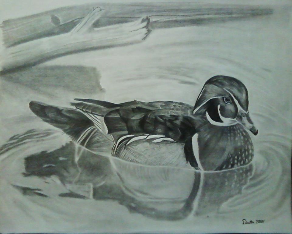 960x768 Duck Pencil Drawing By Bola Sponsee Dustin Dattilio Bolart