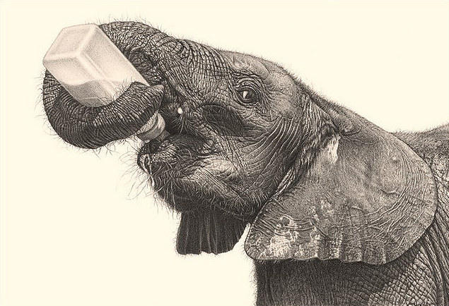 635x434 42 INCREDIBLY REALISTIC AND ADORABLE PENCIL ILLUSTRATIONS OF