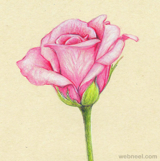 660x665 40 beautiful flower drawings and realistic color pencil drawings