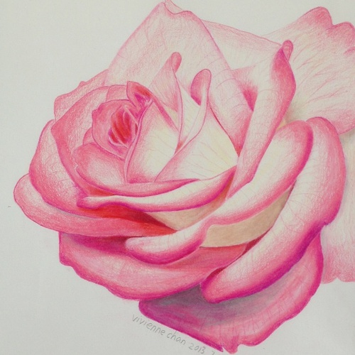 500x500 Colored Pencil Drawing Of Rose By Gadbeee On DeviantArt