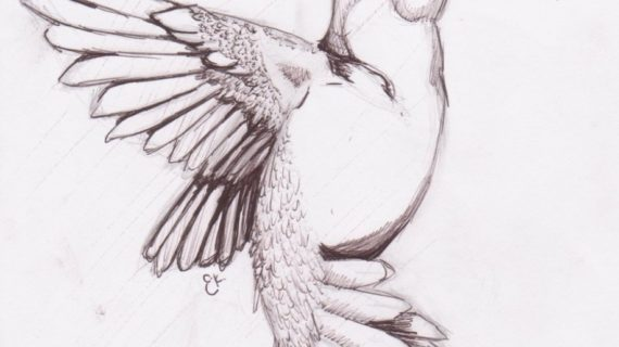 570x320 Pencil Drawing Bird Free Download Images Easy Pencil Drawings