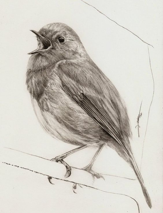 Pencil Drawing Pictures Of Birds at GetDrawings | Free ...