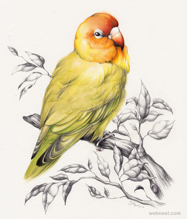 Realistic Pencil Drawings Of Lovebirds