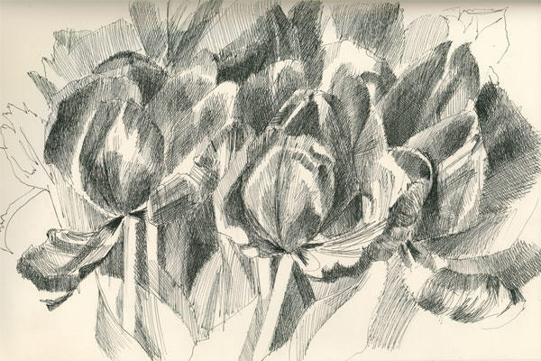 Black And White Line Drawing Flower : Flower drawing structure
