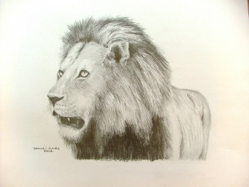 350x262 How To Draw A Lion In Pencil. Drawing, Pencil, Paper, Art, Lesson