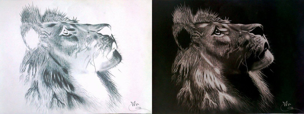 1024x384 Inverted Lion Pencil Drawing By Criss ) By Badrotelli