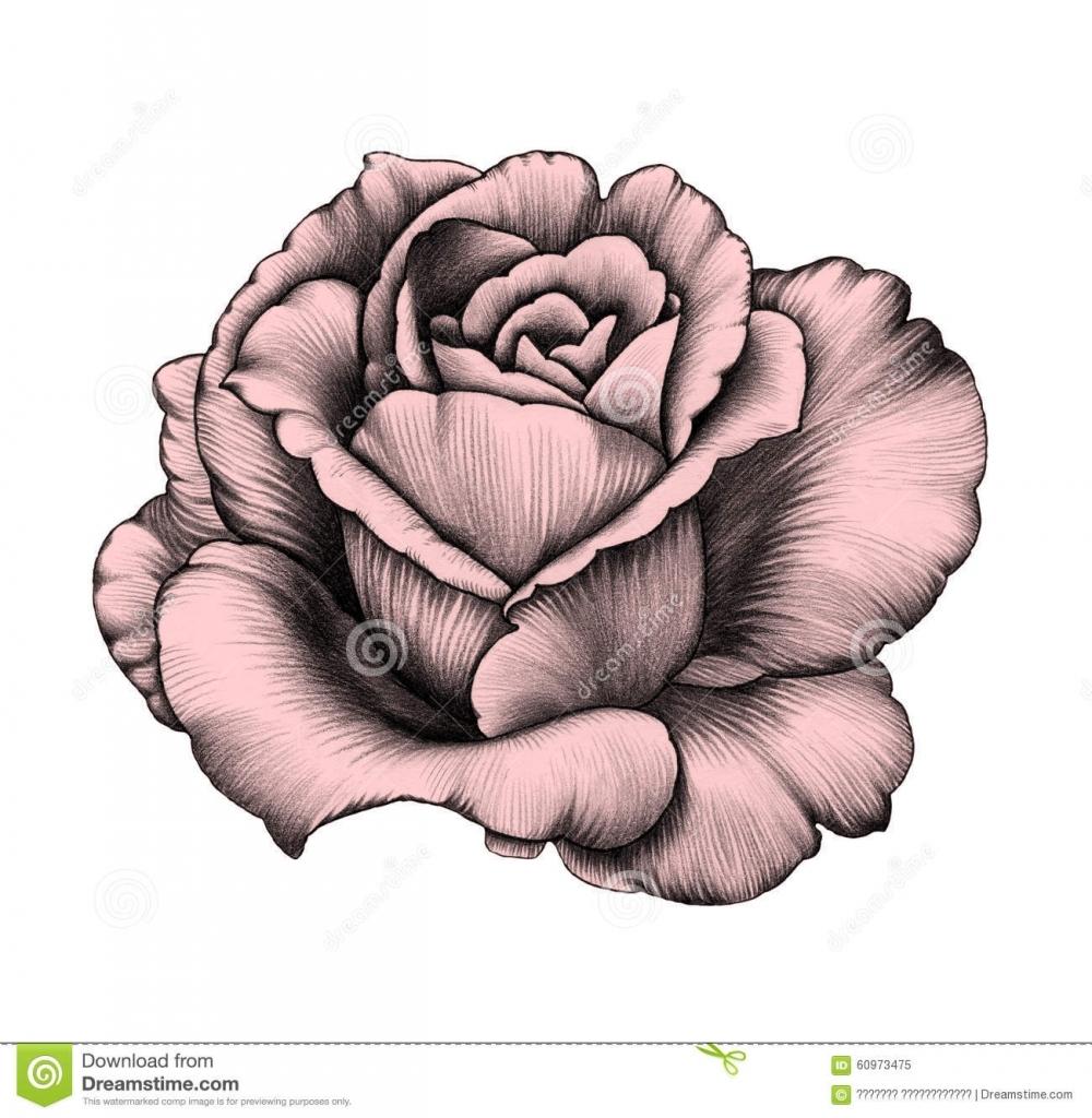 pencil rose drawing at getdrawings free download