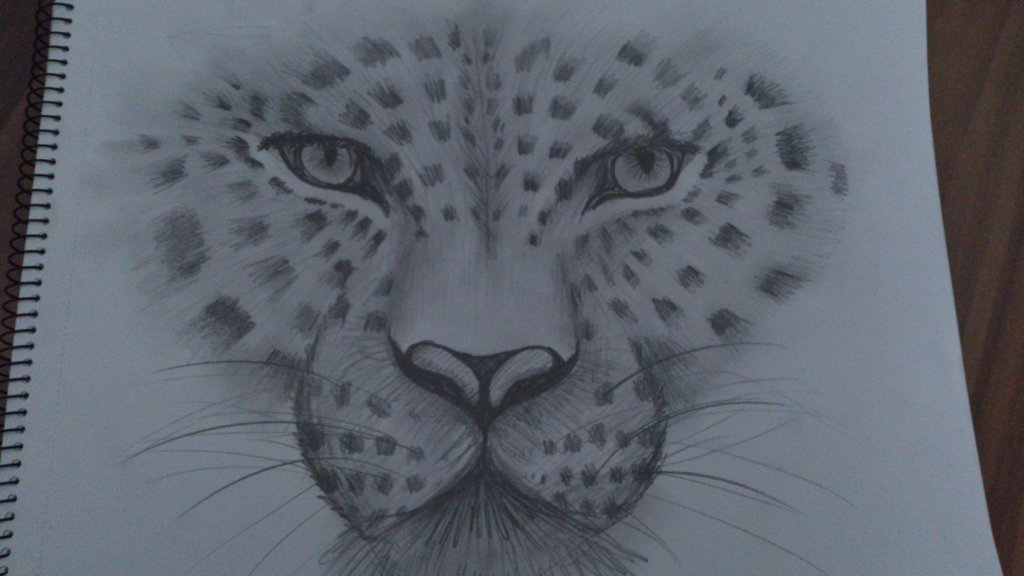 1024x576 leopard pencil sketch drawing by lilith303 on deviantart