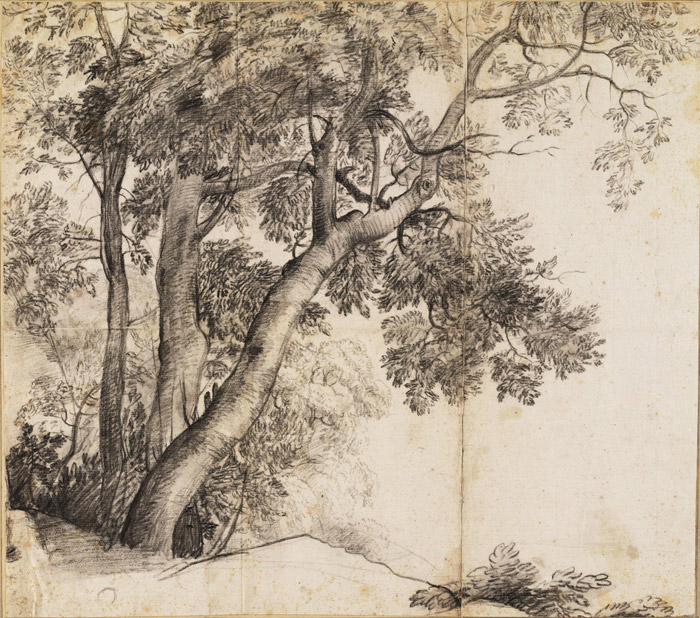 700x618 Drawing Trees