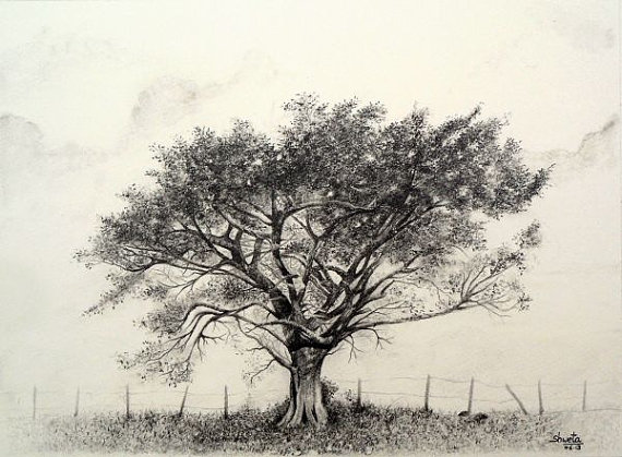 570x419 Pencil Drawing Of A Tree Ltbgttree Drawingsltgt, Ltbgtpencilltgt