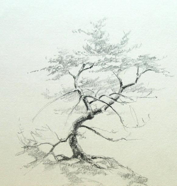 582x612 Pictures Pencil Sketch Of Trees,