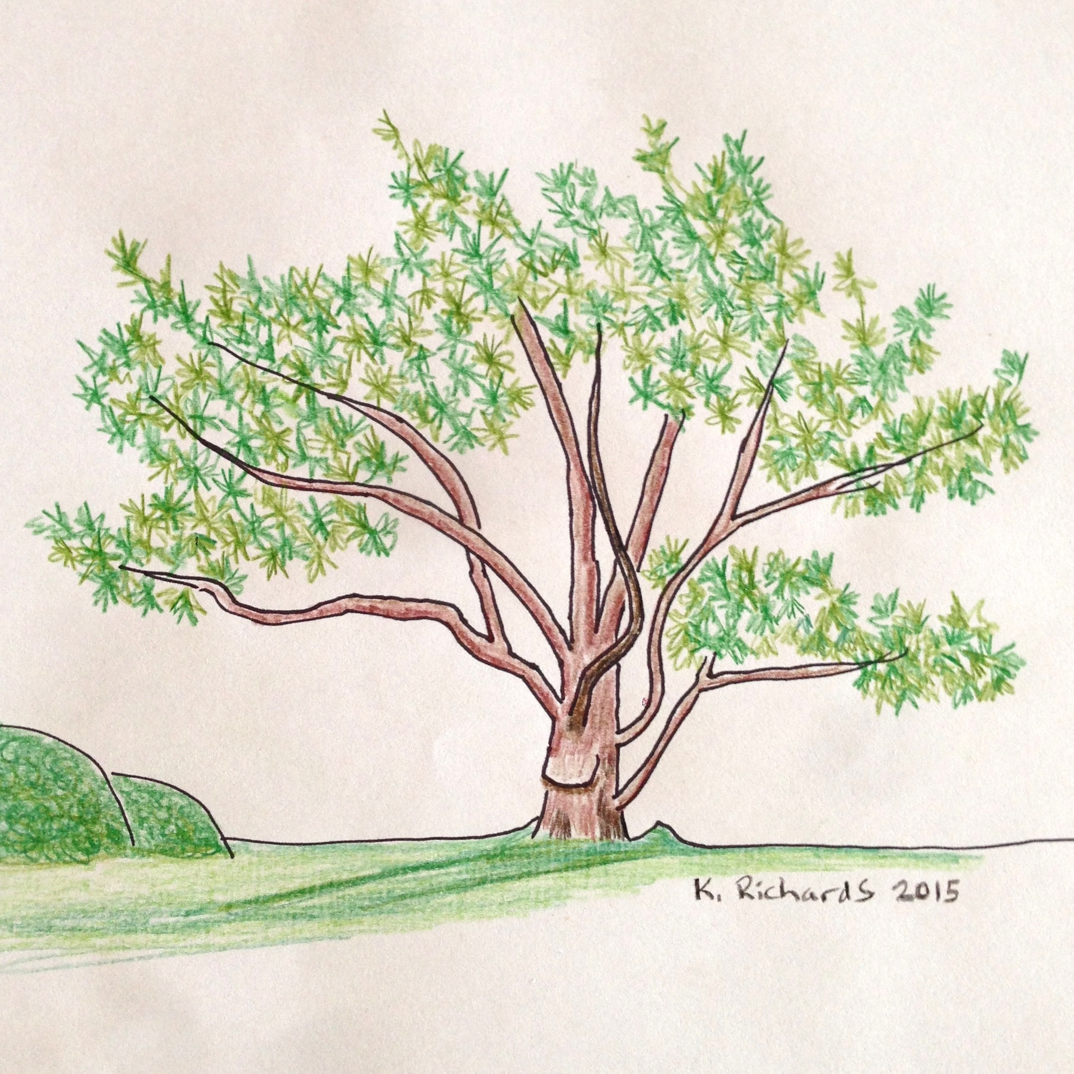 2144x2144 Tree Drawing 30 From Memory Ticklehead