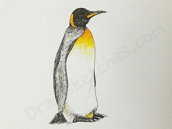 600x450 How To Draw A Penguin In A Few Easy Steps With Pictures