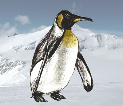 400x345 How To Draw A Penguin