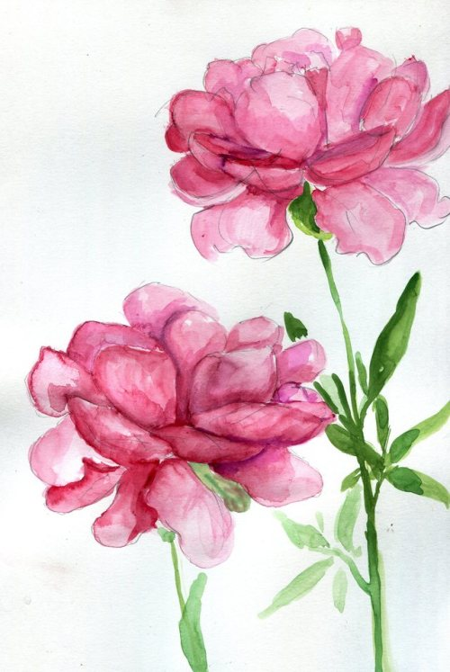 500x747 Peonies Drawing Tumblr Num