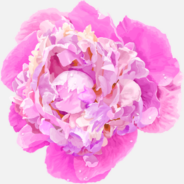 368x368 Peony Flower Drawing Free Vector Download (97,861 Free Vector)