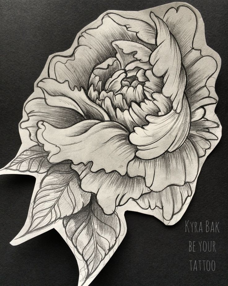 peony drawing at getdrawings free for