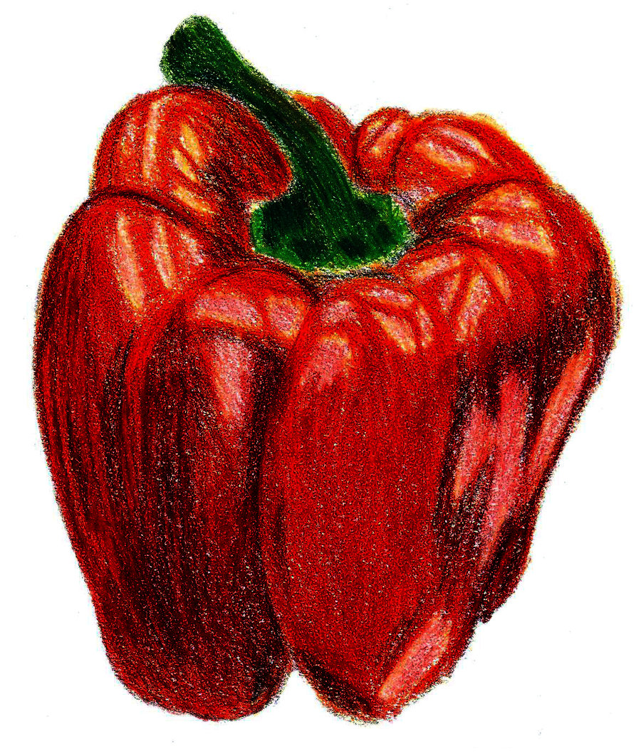 900x1062 Pin By Luke On Ycn Quorn Pepper Illustrations Quorn